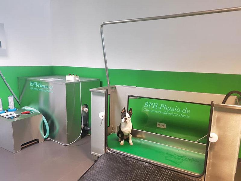 Unterwasserlaufband für Hunde Hundephysiotherapie
